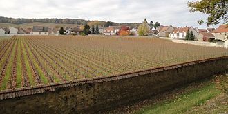 Champagne Krug - Clos du Mesnil.