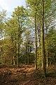 Closedown Wood - geograph.org.uk - 410917.jpg