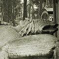 Cmentarz Łyczakowski we Lwowie 2004 02.jpg