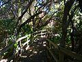 Cocoa Beach at Lori Wilson Park - Flickr - Rusty Clark (43).jpg
