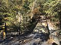 Coldwater River nature trails 8.jpg