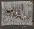 Collectie NMvWereldculturen, RV-A102-1-119, 'Kamp op den Cotticaberg. Sullie, C.H. de Goeje, A. Franssen Herderschee'. Foto- G.M. Versteeg, 1903-1904.jpg