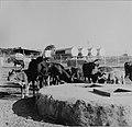 Collectie Nationaal Museum van Wereldculturen TM-20006291 Koeien bij een waterput naast een opslagplaats van de Shell Sint Maarten Boy Lawson (Fotograaf).jpg