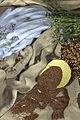 Composition lin textile Cl J Weber (24057620806).jpg