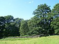 Coppice Wood, Padley - geograph.org.uk - 1392960.jpg