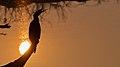 Cormorant calls out at dawn.jpg