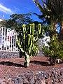 Costa del Silencio, Santa Cruz de Tenerife, Spain - panoramio (1).jpg