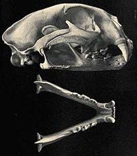 femme black cougar waterloo