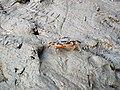 Crabs roaming.jpg