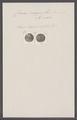 Crania ringens - - Print - Iconographia Zoologica - Special Collections University of Amsterdam - UBAINV0274 093 02 0005.tif