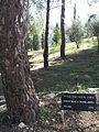 Csezlaw milosz tree.jpg