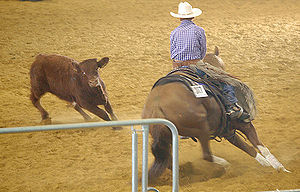 Stock horse - A cutting horse working a cow