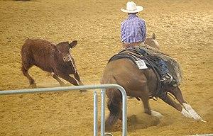 A cutting horse