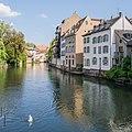 Cygne à la pêche (Canal de la Zornmühle) (42664241191).jpg