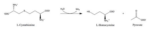 Reaction catalyzed by cystathionine beta-lyase