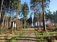 D-BW-SIG-Mengen - Stadtwald Mengen 001.JPG