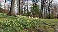 Daffodil Hill 03 - Lake View Cemetery (32083860080).jpg