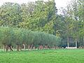 Dalfsen, Den Aalshorst tuin- en parkaanleg RM528702 (6).jpg