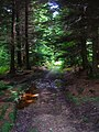 Dallington Forest - geograph.org.uk - 505814.jpg