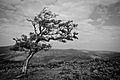 Dartmoor - Combestone Tor (6238818606).jpg