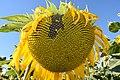 De la floraison à la fructification (1).jpg