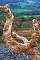 Dead Tree, Hawnby Hill - geograph.org.uk - 1013073.jpg