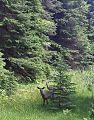 Deer9030.jpg