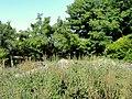 Denver Botanic Gardens - DSC01072.JPG