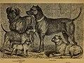 Der Hund und seine Racen. Naturgeschichte des zahmen Hundes, seiner Formen, Racen und Kreuzungen (1876) (20674436168).jpg