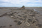 The remains of a ship, it's ribs remain sticking out of the sand