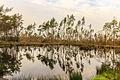 Diakonievene. Natuurgebied van It Fryske Gea 022.jpg