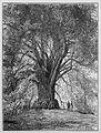 Die Gartenlaube (1889) b 277.jpg