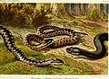 Die Reptilien und Amphibien mitteleuropas (1912) (20319872824).jpg