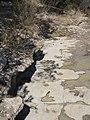 Dinosaur Tracks - panoramio.jpg