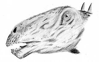 Galeamopus - Restoration of the head of G. pabsti