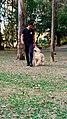 Dog-walker.jpg