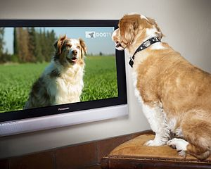 Dog TV - Image: Dog TV pic
