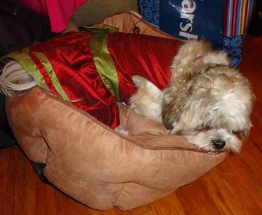 Dog sleeping in a dog bed Rescue Dog Or Puppy For Christmas
