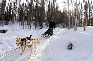 Area code 907 - Sled and team in Houston, Alaska