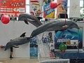Dolphinarium - panoramio (2).jpg