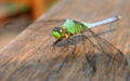 Dragonfly ran-146.jpg