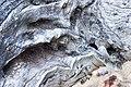 Driftwood Closeup-02+ (140446643).jpg