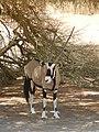 Driving through the Namib Desert (40477184051).jpg