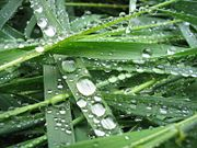 Closeup of droplets of water on blades of grass