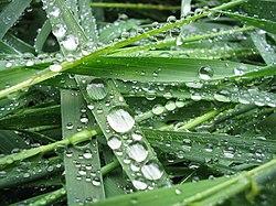 Veden Tiheys Eri Lämpötiloissa