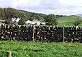 Dry stone wall on Newton Farm - geograph.org.uk - 1420034.jpg