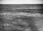 ETH-BIB-Tausende von Wildebeest (Gnu), so weit der Blick reicht, rennen mit unserem Flugzeug über die Serengeti um die Wette-Kilimanjaroflug 1929-30-LBS MH02-07-0060.tif