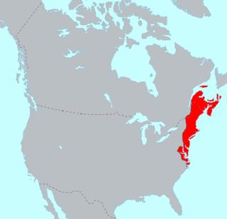 Eastern Algonquian languages