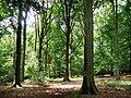 Eastbachmeend Inclosure - geograph.org.uk - 890952.jpg