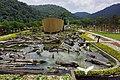 Eco Ark 生態綠舟 - panoramio.jpg